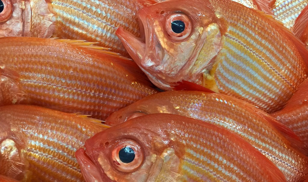 Red Snapper wholesale box