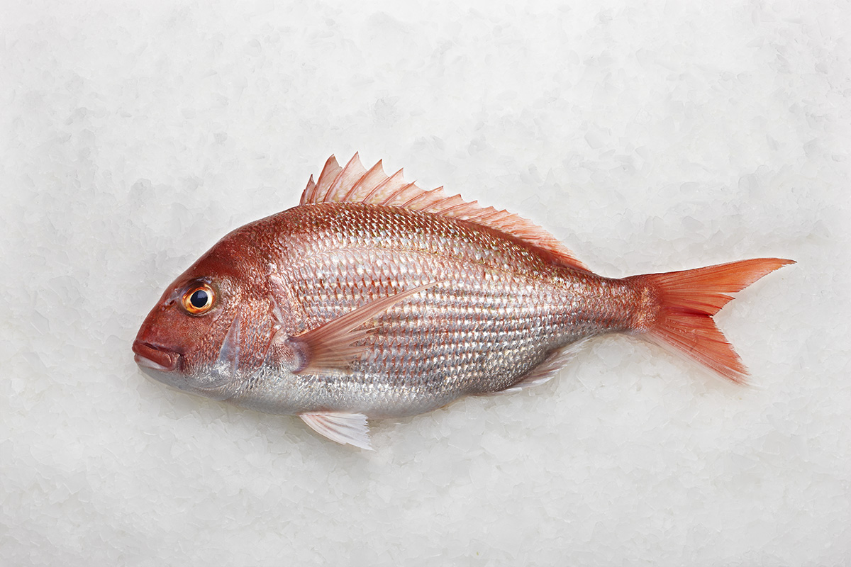 Fresh wild snapper whole fish approx 1kg mm fresh food for Red snapper fish