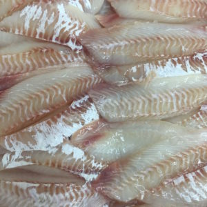 Wild Tarakihi Fillets Skinned & Deboned